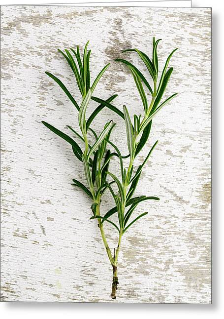 Prepared Greeting Cards - Fresh Rosemary Greeting Card by Nailia Schwarz