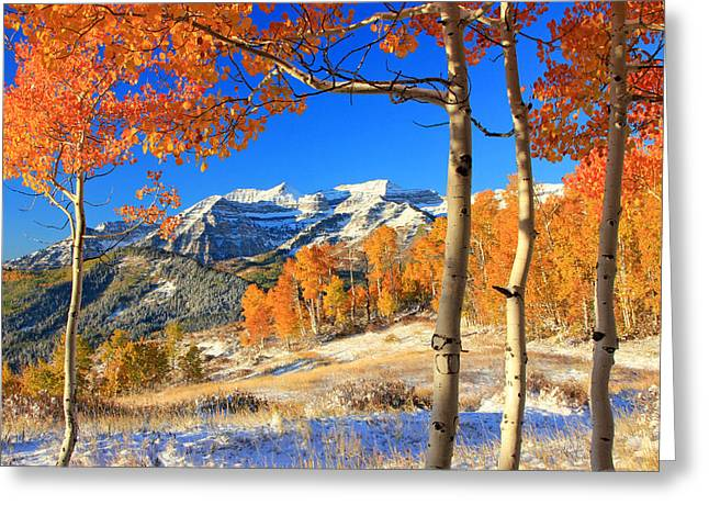 Fall Splendor Greeting Cards - Fresh snow in the aspens. Greeting Card by Johnny Adolphson
