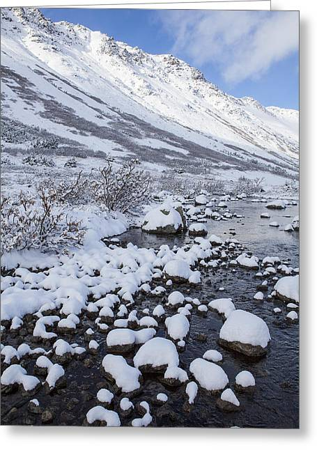 White Willow Greeting Cards - Fresh Snow in the Mountains Greeting Card by Tim Grams