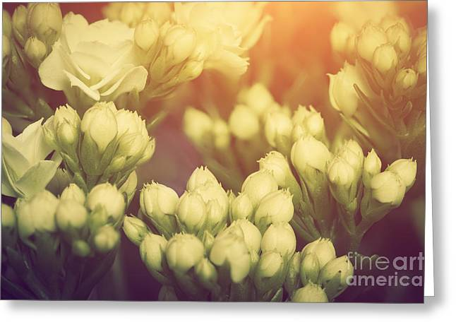 Cards Vintage Greeting Cards - Fresh spring flowers vintage style Greeting Card by Michal Bednarek