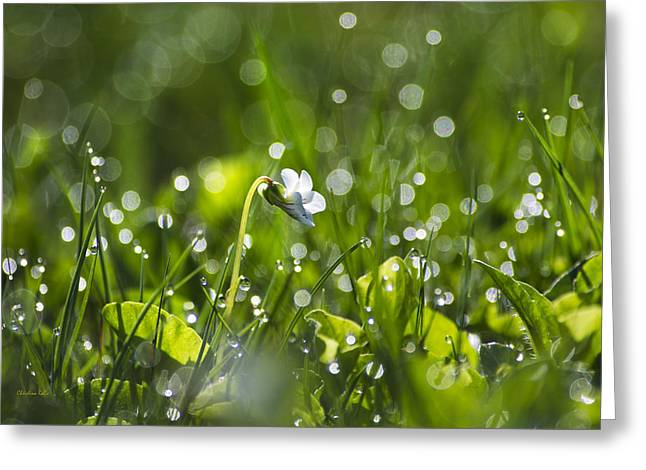Mother Land Greeting Cards - Fresh Spring Morning Dew Greeting Card by Christina Rollo