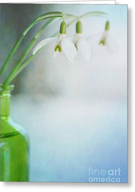 Fresh Snow Greeting Cards - Fresh Spring Greeting Card by Priska Wettstein