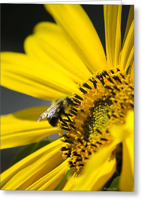 Sunflower Joy Greeting Cards - Sunflower and Bee Greeting Card by Christina Rollo