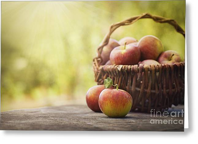 Scissors Greeting Cards - Freshly harvested apples Greeting Card by Mythja  Photography