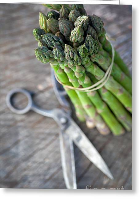 Nutriment Greeting Cards - Freshly harvested asparagus Greeting Card by Mythja  Photography