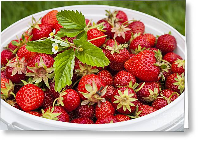 Produce Greeting Cards - Freshly picked strawberries Greeting Card by Elena Elisseeva