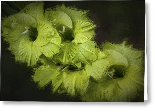 Gladiole Greeting Cards - Freshness Greeting Card by Vronja Photon