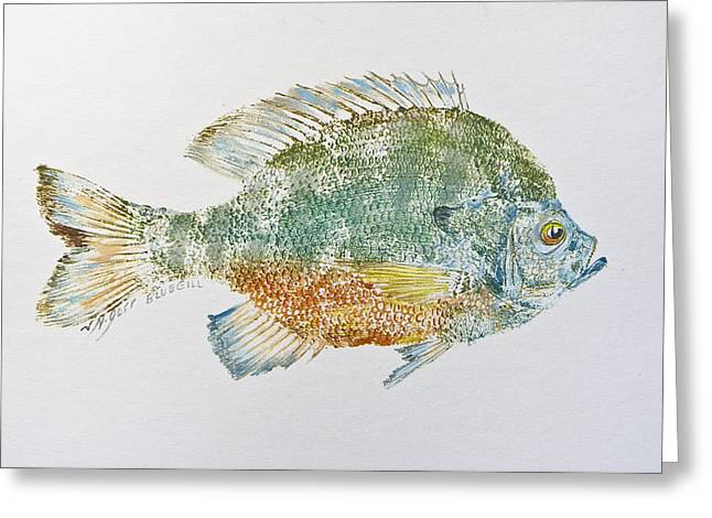 Nancy Gorr Greeting Cards - Freshwater Bluegill Greeting Card by Nancy Gorr