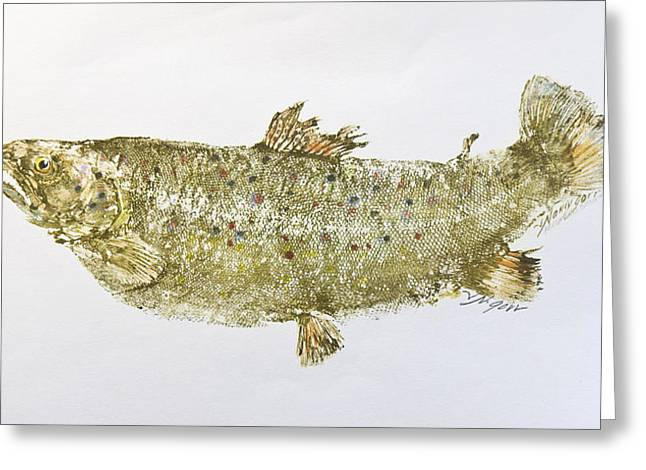 Freshwater Brown Trout Greeting Card by Nancy Gorr