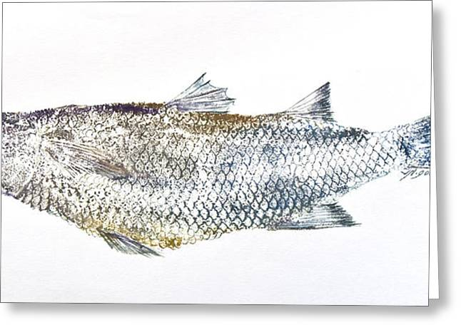 Nancy Gorr Greeting Cards - Freshwater Jumping Mullet Greeting Card by Nancy Gorr