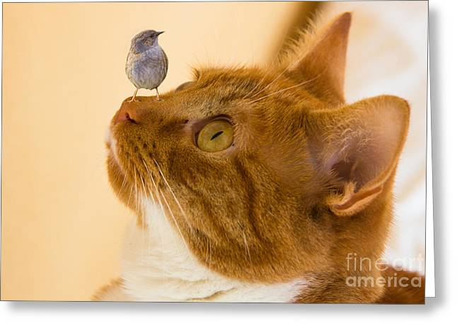 Cat Prints Greeting Cards - Friend or Foe Greeting Card by Brian Roscorla