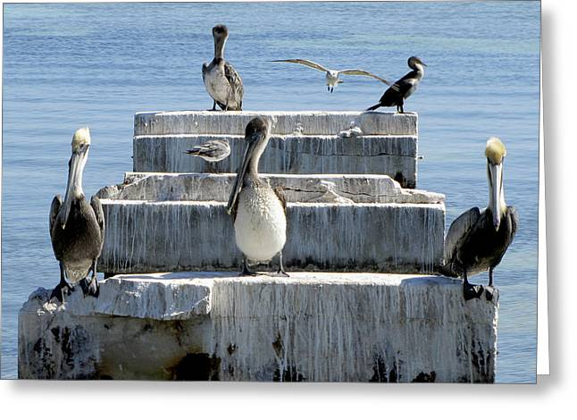 Sea Birds Greeting Cards - Friends Greeting Card by Bob Slitzan