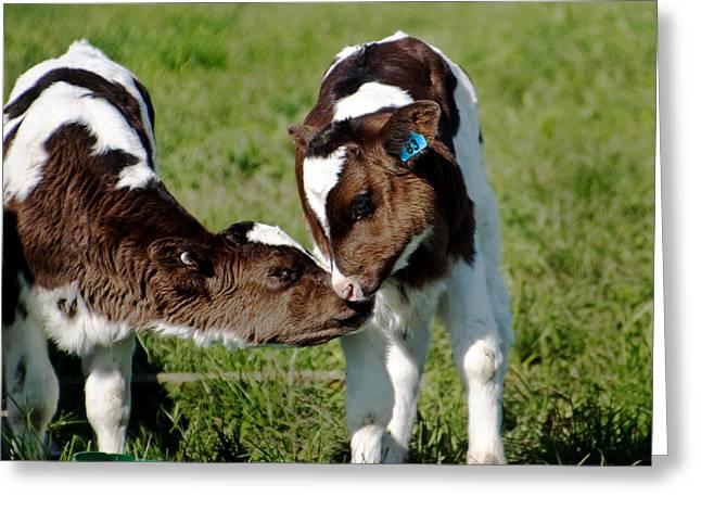 Farmlife Greeting Cards - Friends Greeting Card by Kim Fraser