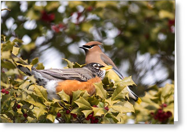 Landscape Iphone Phone Case Greeting Cards - Friends Robin and Cedar Waxwing Greeting Card by Terry DeLuco
