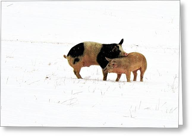 Piglets Greeting Cards - Friendship Greeting Card by Marcia Lee Jones