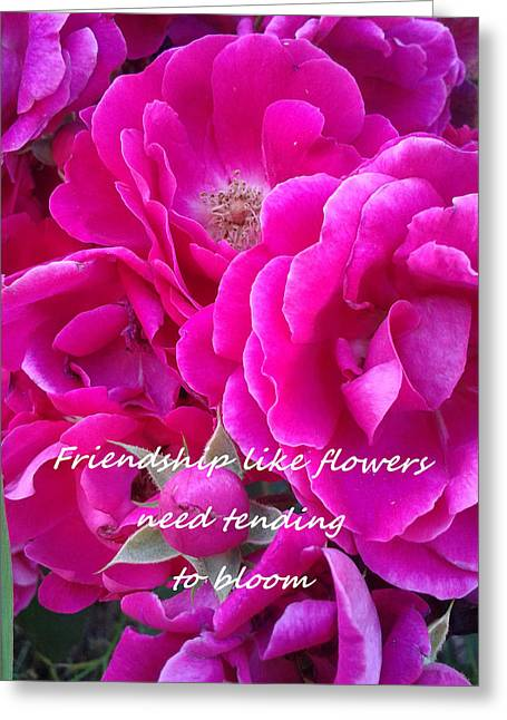 Inner Self Photographs Greeting Cards - Friendship Roses Greeting Card by MarLa Hoover