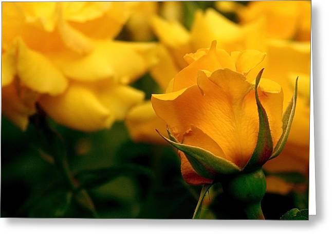 Fresh Greeting Cards - Friendship Roses Greeting Card by Rona Black