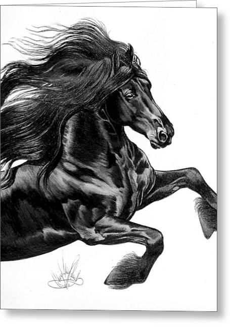 Horse Images Drawings Greeting Cards - Friesian Greeting Card by Cheryl Poland