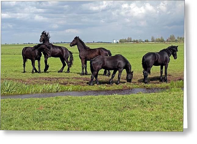 Friesian Horses Greeting Card by Dirk Wiersma