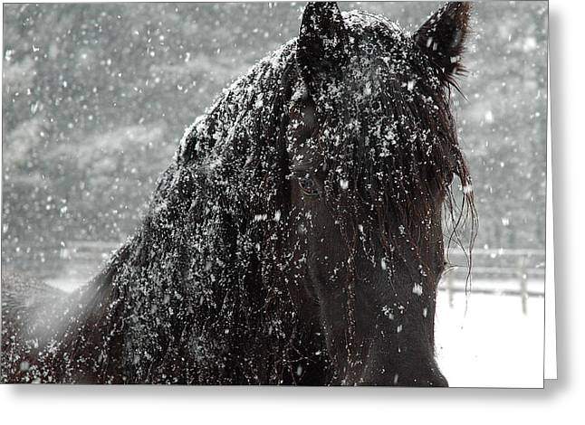 Horse Photographs Greeting Cards - Friesian Snow Greeting Card by Fran J Scott