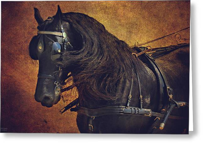 Wild Horses Greeting Cards - Friesian Under Harness Greeting Card by Lyndsey Warren