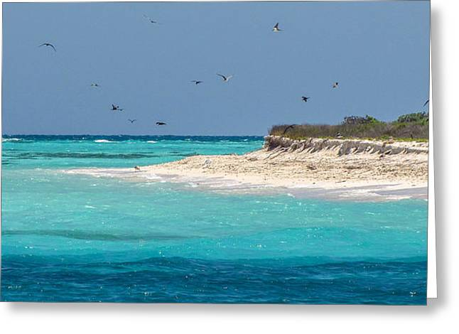Frigatebirds And Turquoise Waters Greeting Card by Beth Harcek