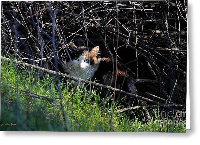 Susan Wiedmann Greeting Cards - Frightened Feral Calico  Greeting Card by Susan Wiedmann
