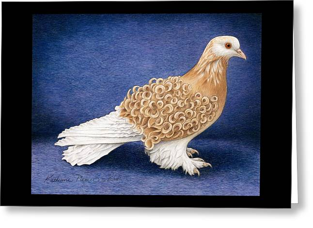 Frillback Pigeon Greeting Card by Katherine Plumer