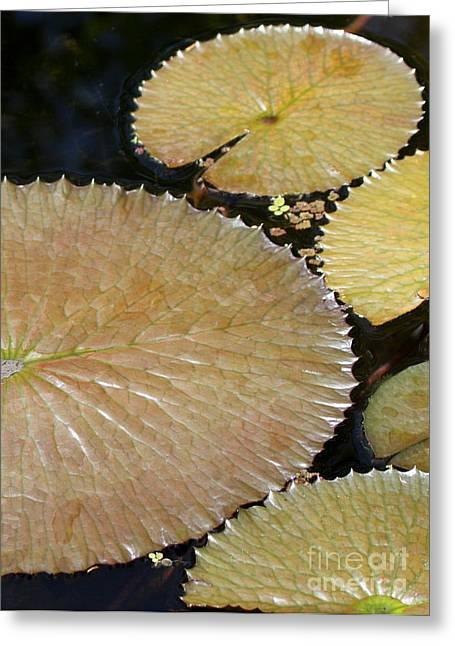 Wets Palm Beach Greeting Cards - Frilly Brown Circles Greeting Card by Sabrina L Ryan