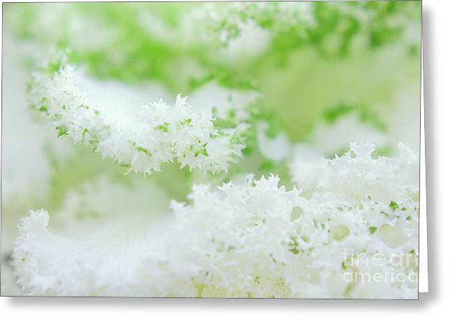 Ruffled Petals Greeting Cards - Frilly Clouds Greeting Card by Charline Xia