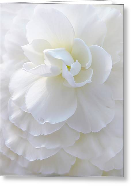 Ivory Flower Greeting Cards - Frilly Ivory Begonia Flower Greeting Card by Jennie Marie Schell