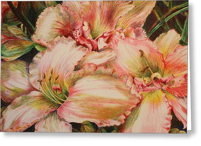 Day Lilly Drawings Greeting Cards - Frilly Pinks Greeting Card by Barbara Ebeling