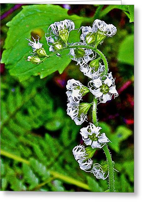 State Parks In Oregon Greeting Cards - Fringe Cups on Clatsop Loop Trail in Ecola State Park-Oregon Greeting Card by Ruth Hager