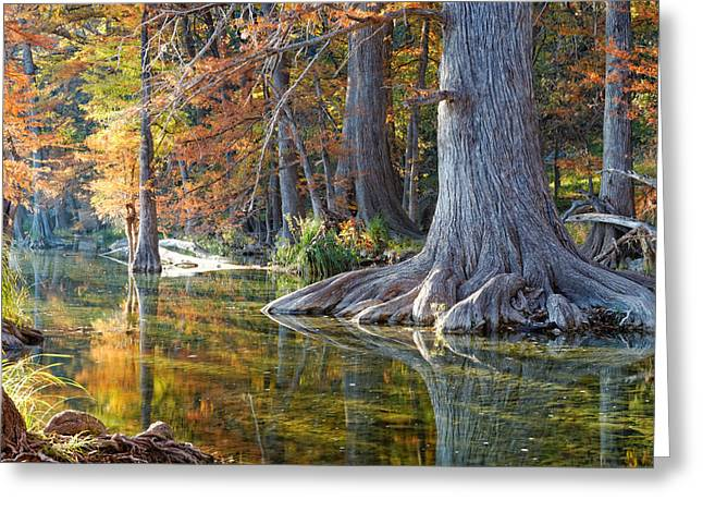 Parks And Wildlife Greeting Cards - Frio River morning Greeting Card by Silvio Ligutti