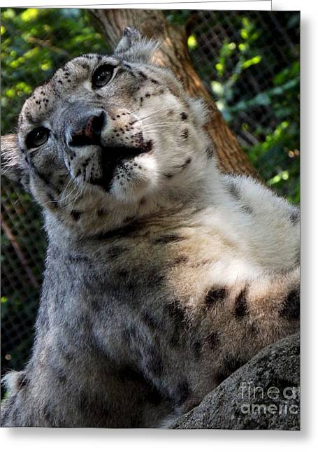 Pittsburgh Zoo Greeting Cards - Frisky Greeting Card by Chad Thompson