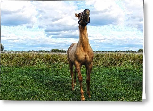 Quarterhorses Greeting Cards - Frisky Greeting Card by Mountain Dreams