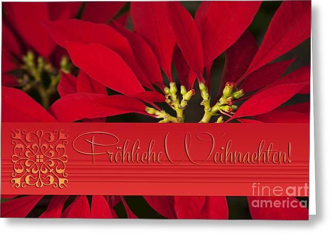 Stella Art Greeting Cards - Froehliche Weihnachten - Poinsettia  - Euphorbia pulcherrima Greeting Card by Sharon Mau