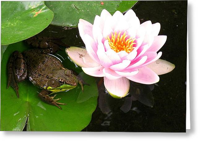 Debbie Finley Greeting Cards - Frog and Lily Greeting Card by Debbie Finley