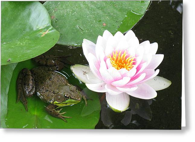 Debbie Finley Greeting Cards - Frog and Lily Pad Greeting Card by Debbie Finley