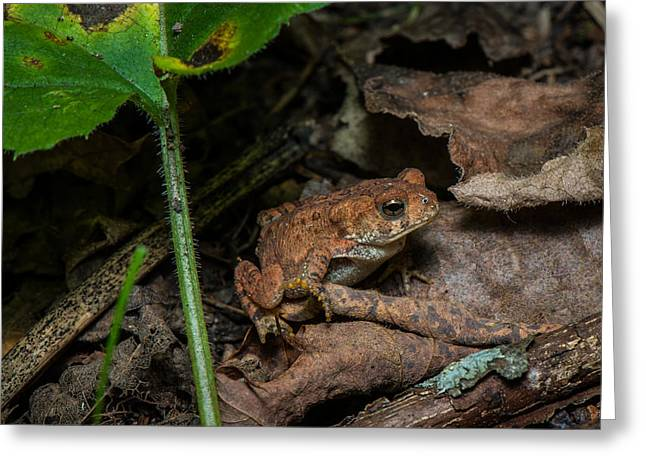 Treefrog Greeting Cards - Frog Hiding On The Forest Floor Greeting Card by Paul Freidlund