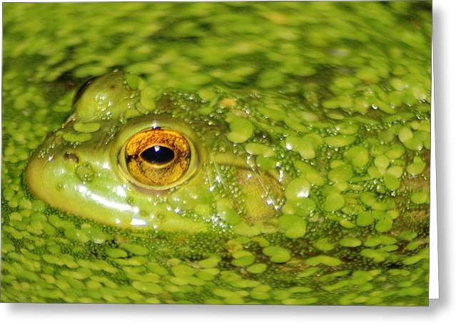 Vocalizations Mixed Media Greeting Cards - Frog in single celled algae Greeting Card by Optical Playground By MP Ray