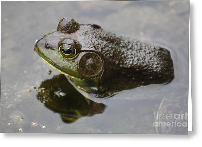 Wishful Thinking Greeting Cards - Frog Greeting Card by Joseph Marquis
