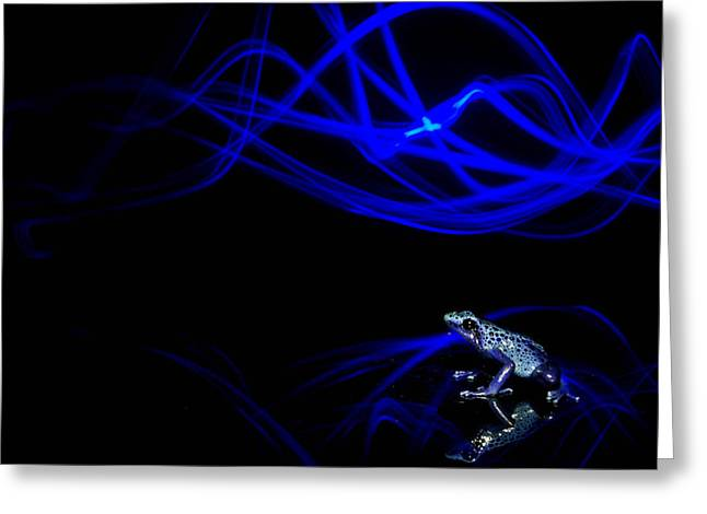 Dyeing Greeting Cards - Frog Lights Greeting Card by JP Lawrence
