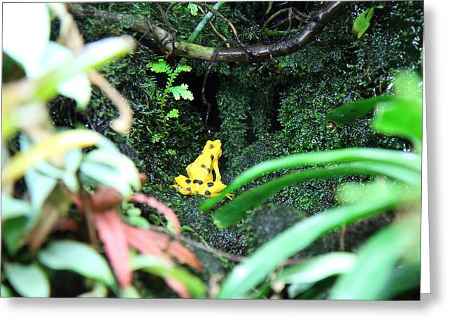 Frog Photographs Greeting Cards - Frog - National Aquarium in Baltimore MD - 12121 Greeting Card by DC Photographer