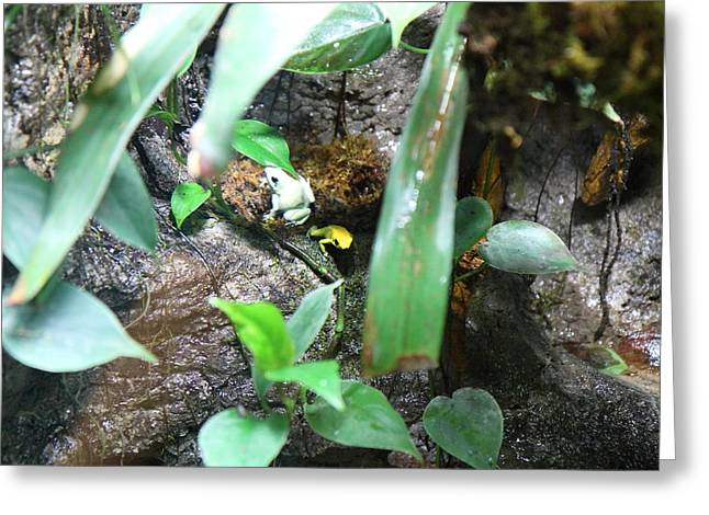 Frogs Greeting Cards - Frog - National Aquarium in Baltimore MD - 12126 Greeting Card by DC Photographer