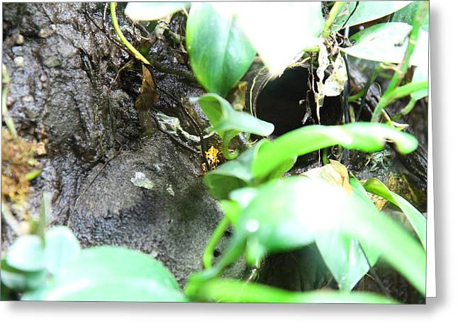 Frogs Greeting Cards - Frog - National Aquarium in Baltimore MD - 12127 Greeting Card by DC Photographer
