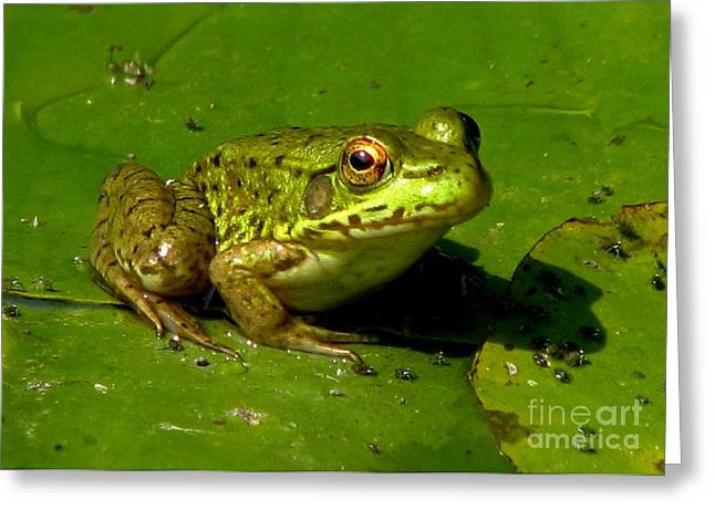 Shelley Myke Greeting Cards - Frog on a Lily Pad Greeting Card by Inspired Nature Photography By Shelley Myke