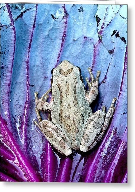 Toe Pad Greeting Cards - Frog on cabbage Greeting Card by Jean Noren