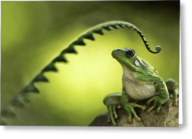 Tree Frog Photographs Greeting Cards - Frog on green background Greeting Card by Dirk Ercken