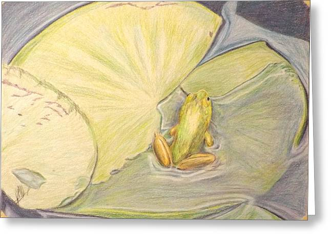 Wild Life Drawings Greeting Cards - Frog on Lilypad Greeting Card by John Meyers